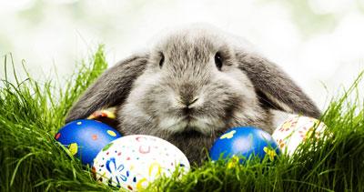 Easton Bunny Photos