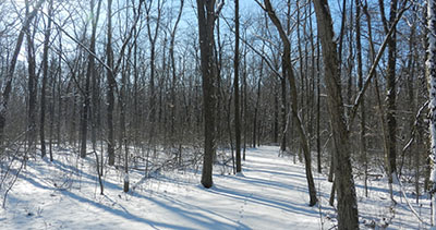 Winter Wings Trivia Walk