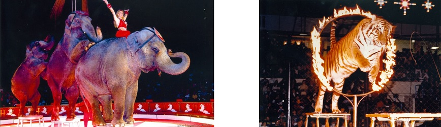 Aladdin Shrine Circus is Coming! Buy Tickets Now for the Best Seats!